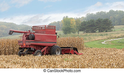 Harvesting Corn - Red combine harvesting corn crop