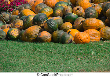 Orange Pumpkins on green grass