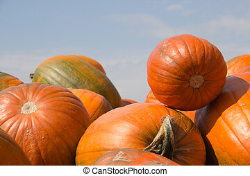 Orange Pumpkins with blue sky