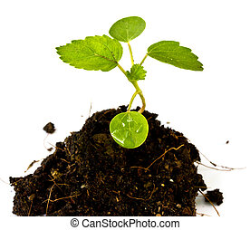 Green sprout growing from seed on soil