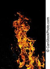 selvagem, fogo