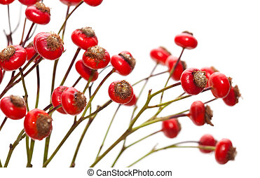 bunch of rose hips isolated on white background