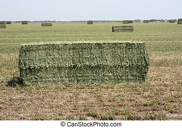 Hay Bales in a field that was ready to pick up.