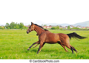 horse nature - beautiful horse in nature run and have family...