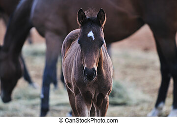 baby horse - beautiful animal horse outdoor run and have fun