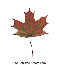 autumn leaf - colorful illustration with autumn leaf on a...