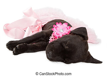 Puppy in Pink Sleeping