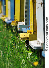 bee home at meadow with flowers and fresh green grass on...