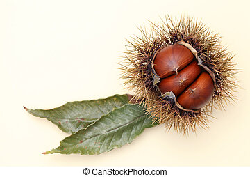 Fresh chestnuts bur on yellow background
