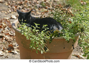 Caught in the Catnip...Again - A beautiful, sleek black cat...
