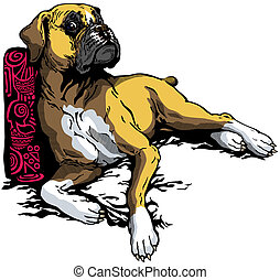 boxer - dog boxer breed
