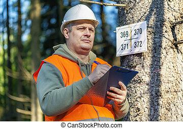 Lumberjack with folder near marked tree in forest