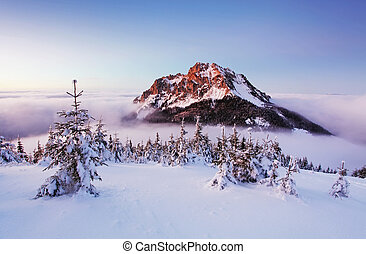 Winter mountain landscape with tree