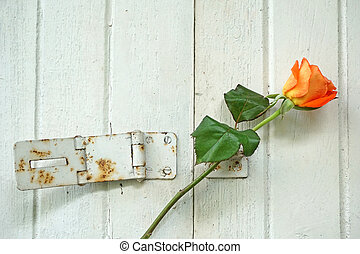 Rose at the door (love concept)