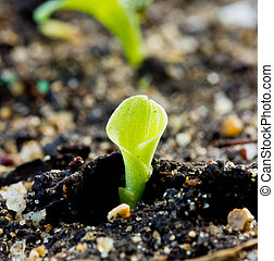Green sprout growing from seed on soil.