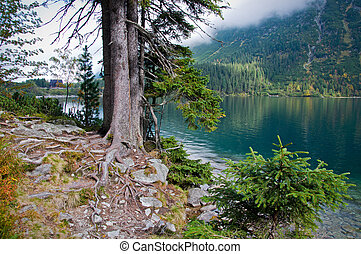 lakeshore - pines on the shore of a mountain lake