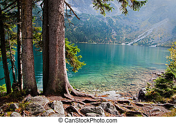 pines on the shore of a mountain lake