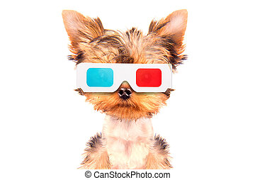 dog going to the movies isolated on a white background