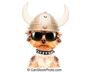 dog dressed up as a viking on a white background