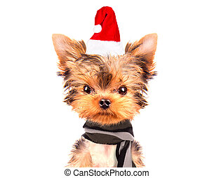 christmas dog as santa on a white background