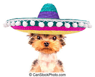 dog wearing a mexican hat - cute puppy dog wearing a mexican...