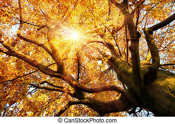 Magnificent autumn scenery - The autumn sun warmly shining...