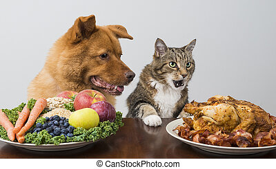 Dog and cat choosing between veggies and meat - Dog and cat...