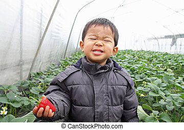 Japanese boy eating strawberry (2 years old)