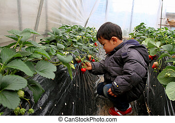 Japanese boy eating strawberry 2 years old