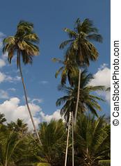 Palmeras bajo el cielo azul - Palmeras en playa tropical del...