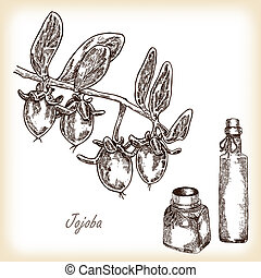 Jojoba fruit with glass bottles. Hand drawn vector illustration