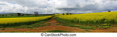 Green hills, golden crops and red earth - Green pastures,...