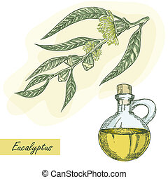 Eucalyptus branch with glass jar hand drawn vector illustration