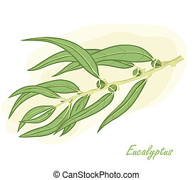 Eucalyptus branch hand drawn vector illustration.