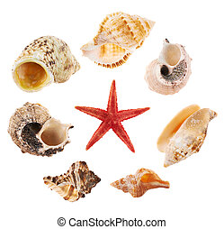 Set of multiple sea shells isolated - Set of a multiple sea...