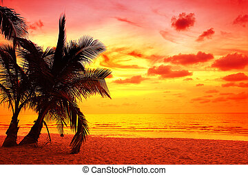 coconut palm trees in sunset