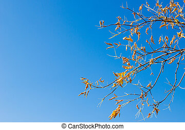 Natural background. Maple branch with yellow leaves against...