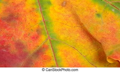 Detail of colored autumn leaves