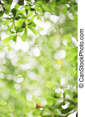 abstract background - abstract green leaf bokeh background