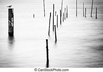 Timber Groynes II - Black and white image of timber groynes...