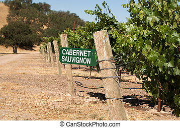 Cabernet Sauvignon grapes growing in California - Sign for...