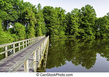 Alabama Swamp with a wooden foot bridge - Bridge leading...