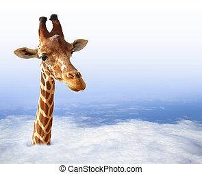 Funny giraffe coming out of the clouds