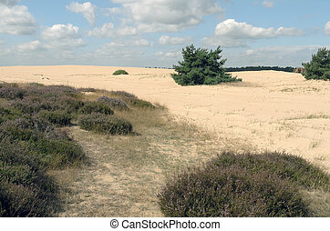 Landscape National Park Hoge Veluwe - Landscape in National...