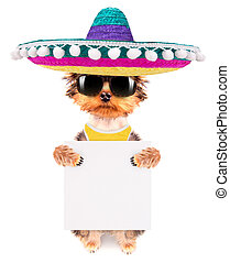 dog wearing a mexican hat with banner - cute puppy dog...