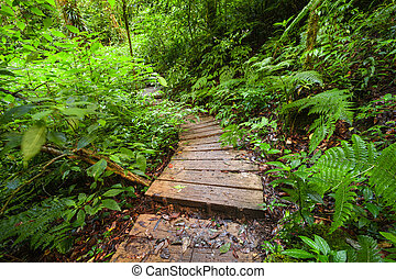 Trekking trail at jungles of ropical rain forest. Thailand -...