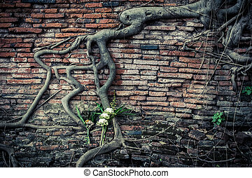 Ancient brick wall with growing banyan tree roots - Ancient...