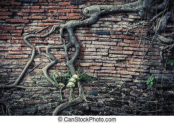 Ancient brick wall with growing banyan tree roots - Ancient...