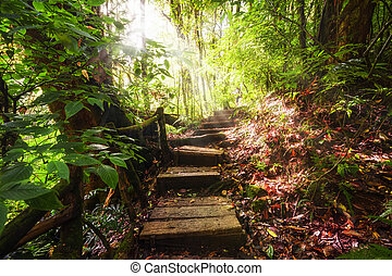 Trekking trail at jungles of ropical rain forest Thailand -...