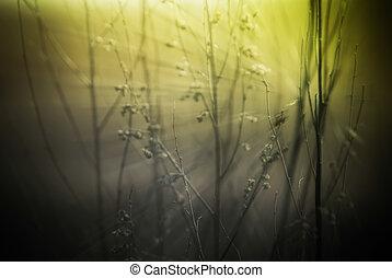 plantas, Silhouet, Extracto, naturaleza, Plano de fondo,...